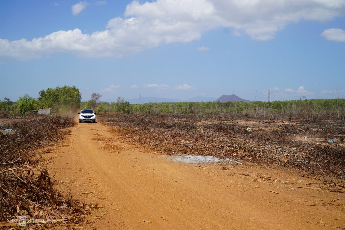 Ô tô chở người đi xem đất liên tục ra vào khu vực chuẩn bị thi công sân bay Phan Thiết. Ảnh: Việt Quốc.