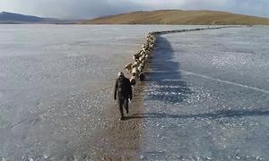 2.000 con cừu nối đuôi nhau vượt hồ băng