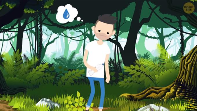 Bạn vào rừng một mình và hết nước uống. Bạn sẽ chọn uống nước từ những nguồn nào sau đây:  A. Cây xương rồng   B. Vũng nước mặn  C. Hồ nước    D. Suối  >>Đáp án