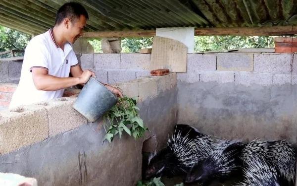 Khu vực nuôi nhím trong trường đại học nông nghiệp Hoa Trung ở Vũ Hán hồi tháng 5/2020. Ảnh: Đại học Nông nghiệp Hoa Trung
