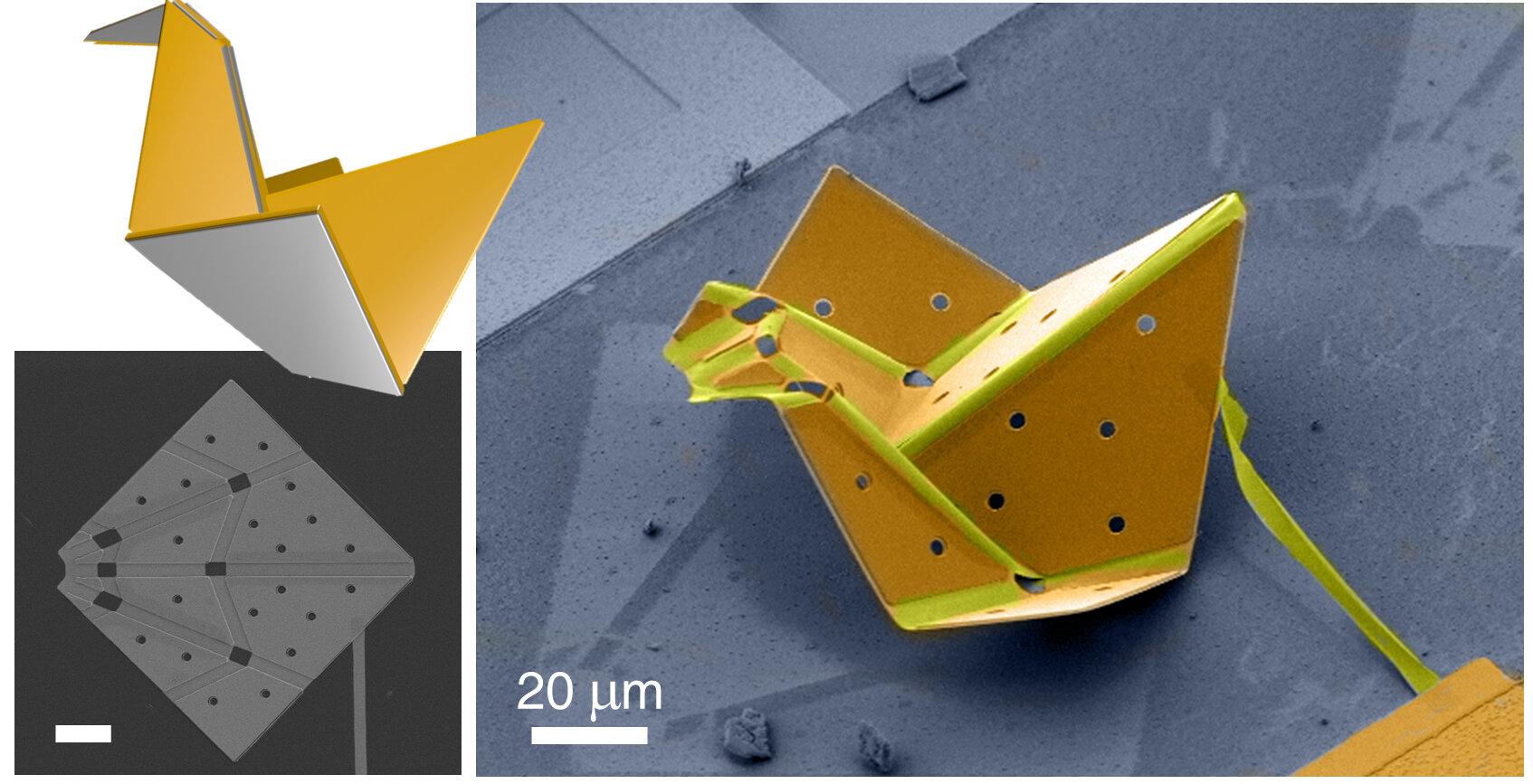 Chim gấp origami nhỏ nhất thế giới. Ảnh: Đại học Cornell.