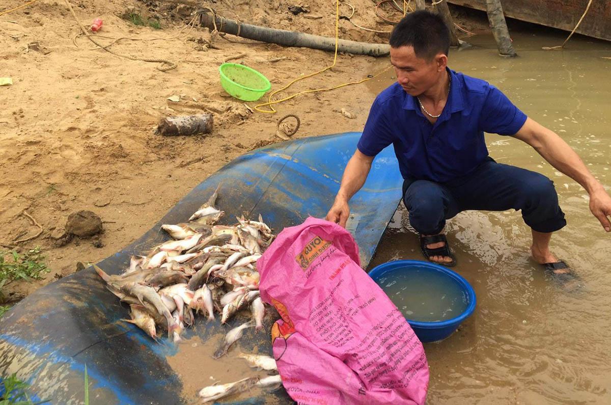Một người dân ở Tân Kỳ vớt được nửa bao tải cá chết trên sông Con, sáng 19/3. Ảnh: CTV