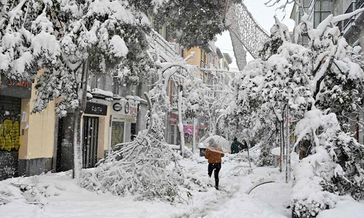 Cây đổ ngổn ngang trên một con đường phủ đầy tuyết ở Madrid. Ảnh: AFP.