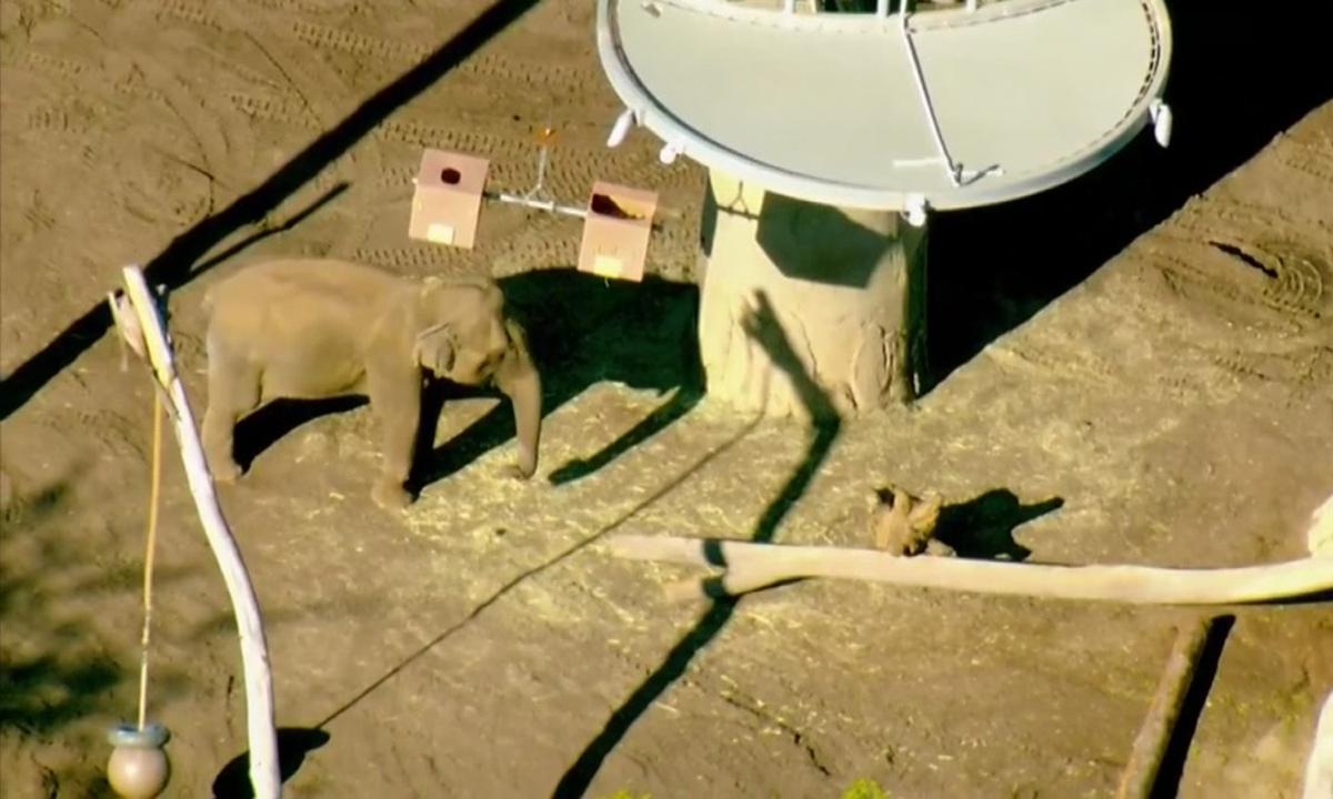 Một chuồng voi ở Sở thú San Diego chiều 19/3. Ảnh: NBC News.
