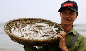 Bủa lưới hàng trăm mét bắt cá đù trên biển