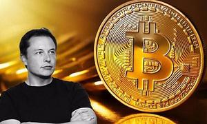 Mua 5.000 USD Bitcoin - lãi cao và mất không sao