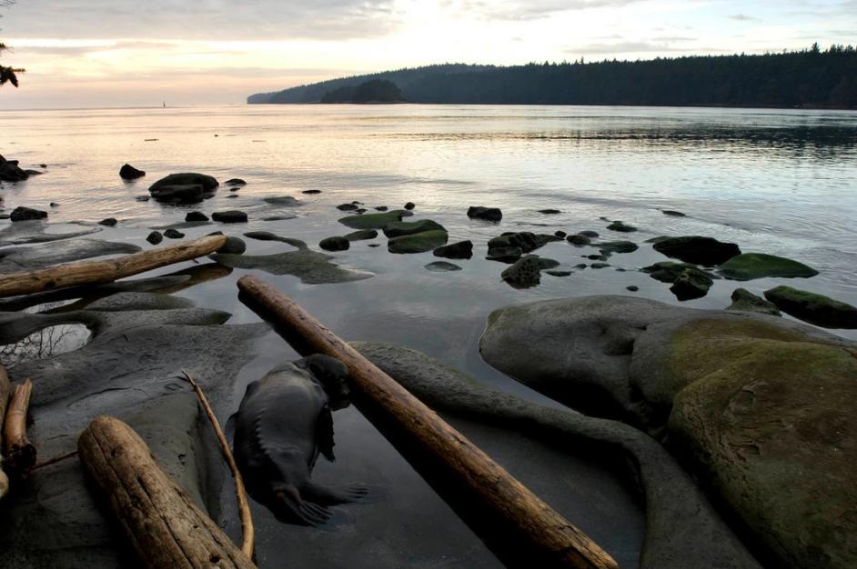 Một bờ biển ở đảo Gabriola, thuộc tỉnh British Columbia, nơi tìm thấy bàn chân thứ 14. Ảnh: The New York Times.