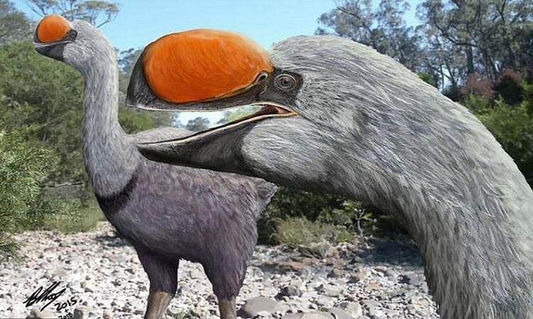 Hình dáng của chim Dromornis stirtoni cổ đại. Ảnh: Brian Choo.