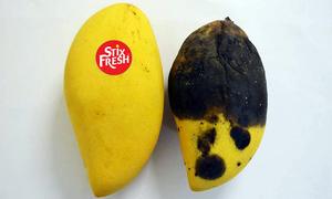 Miếng dán giúp hoa quả tươi lâu hơn 2 tuần