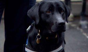Chú chó nghiệp vụ an ủi đầu tiên của London