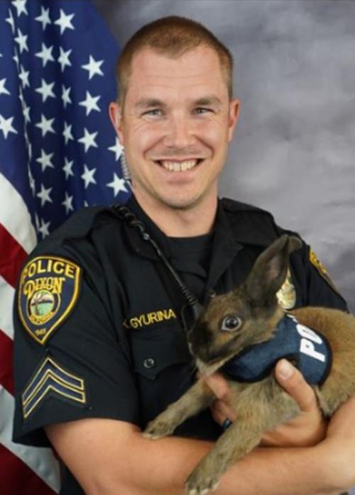Con thỏ Cinnabun trong tay người điều khiển. Ảnh: Dixon Police Deparment.