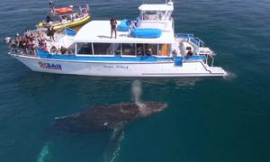 Cá voi lưng gù áp sát thuyền của người đi biển