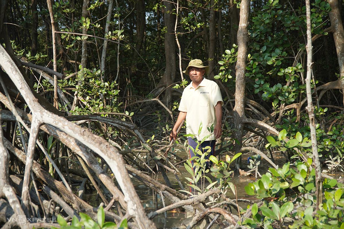 Ông Hoàng đứng trong cánh rừng đước được người trong gia đình ông trồng hàng chục năm trước. Ảnh: Phước Tuấn.