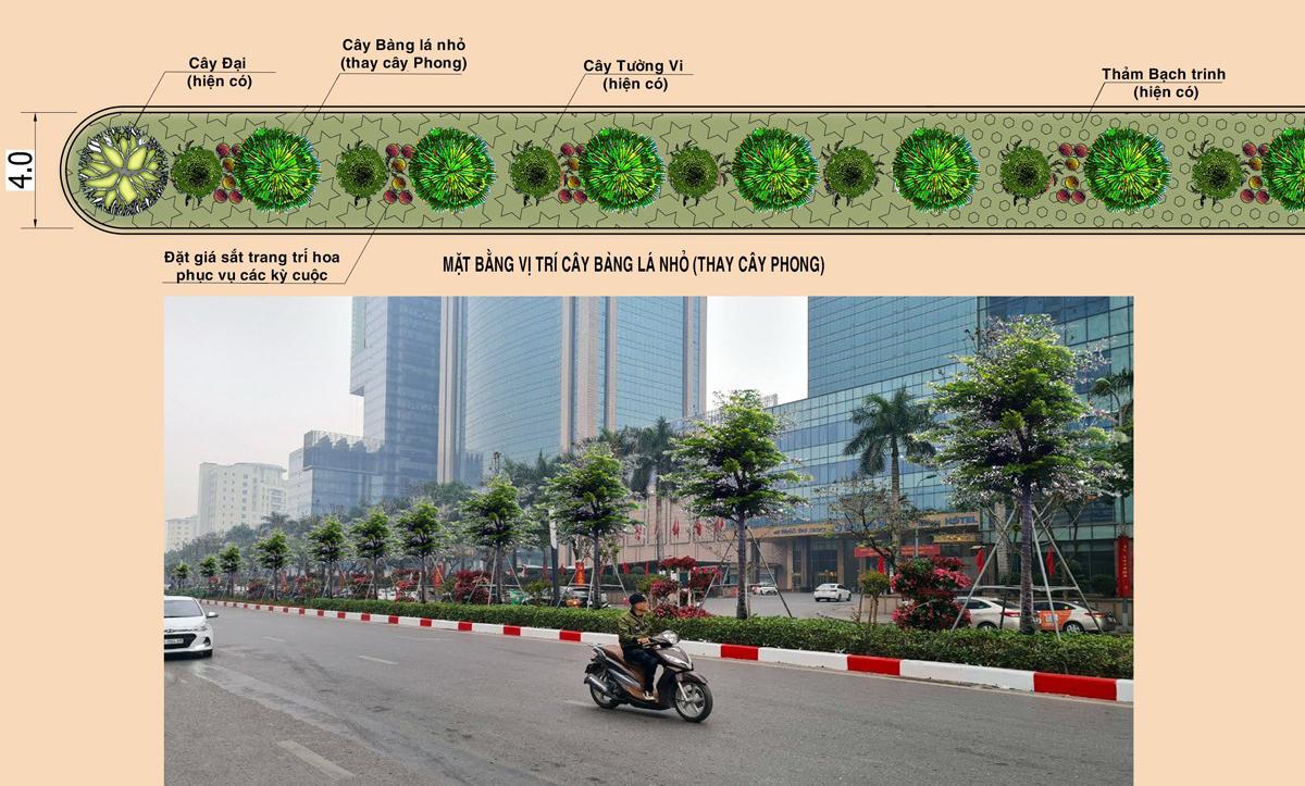 Phối cảnh trồng cây bàng lá nhỏ thay thế cây phong. Nguồn: Sở Xây dựng cung cấp
