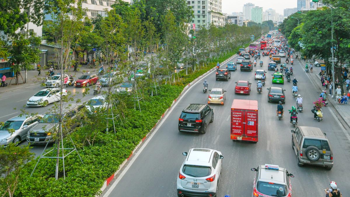 Hàng cây Phong trên đường Nguyễn Chí Thanh thời gian đầu mới trồng sinh trưởng tốt. Ảnh: Kiều Dương.