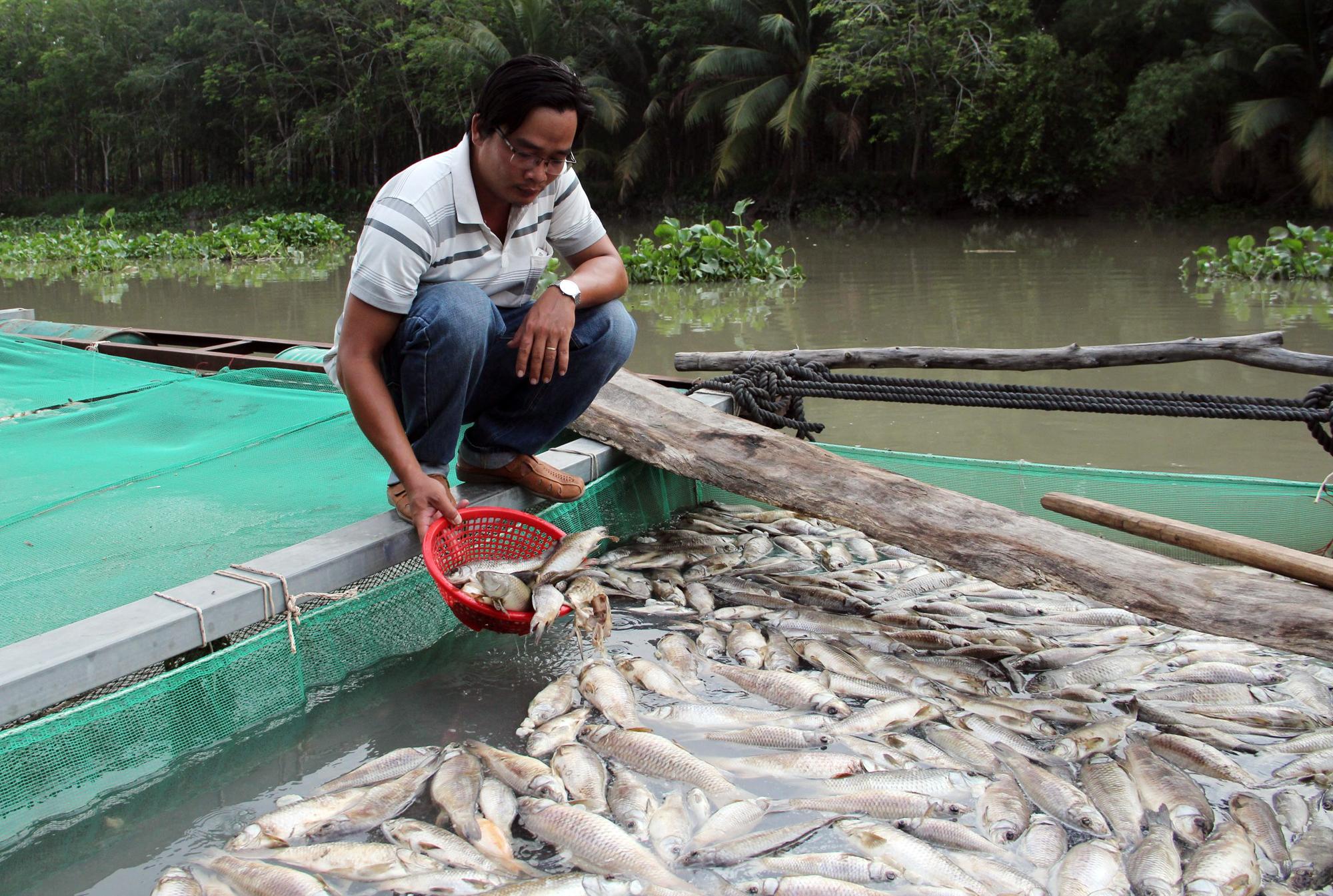 Anh Huỳnh Long Kiểng ngồi bên bè cá chết trắng của mình. Ảnh: Yên Khánh