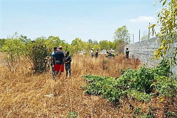 Khu vườn nhà của vợ chồng ông Evans ở xã Thiện Nghiệp bị phát hiện trồng cần sa, trưa 7/4. Ảnh: Công an cung cấp.