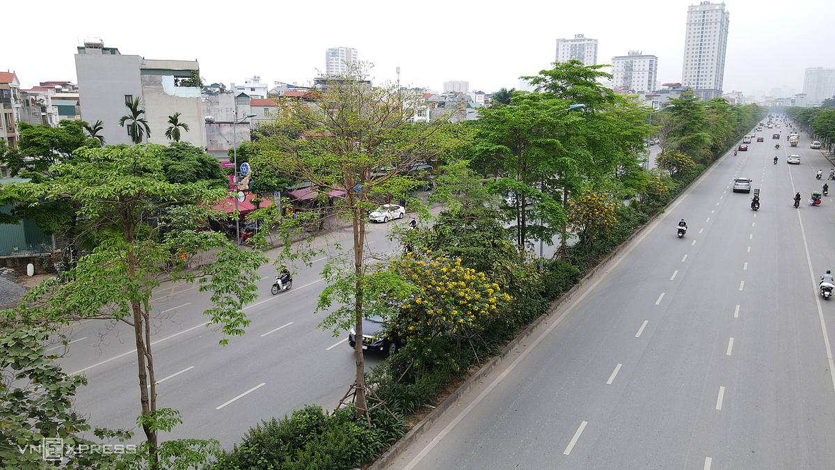 Hàng cây trên đường Võ Chí Công ở Hà Nội. Ảnh: Bá Đô.
