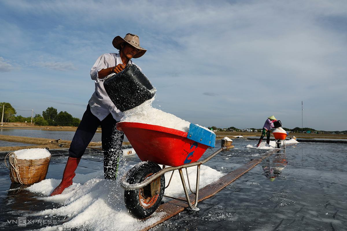 Phát triển kinh tế ở Cần Giờ chủ yếu là nông nghiệp. Nông dân ở huyện thu hoạch muối, tháng 4/2021. Ảnh: Hữu Khoa.