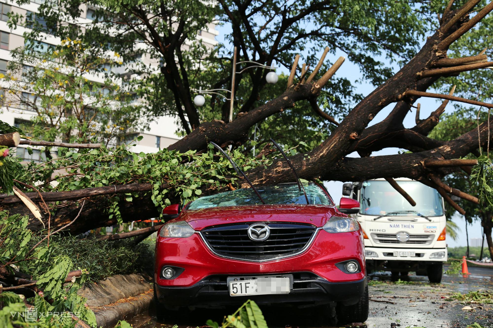 Ôtô bị cây đè bẹp ở Phú Mỹ Hưng, quận 7. Ảnh: Đình Văn