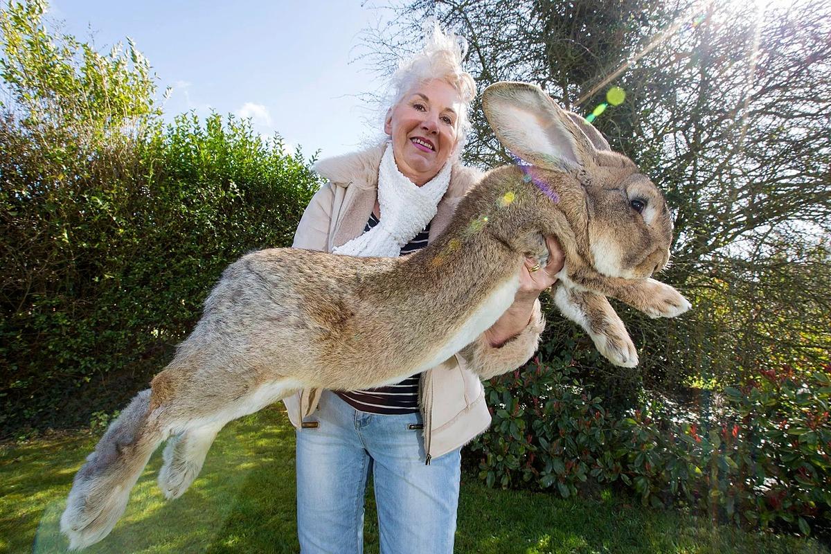 Edwards bế thỏ cưng Darius trong vườn nhà. Ảnh: Carters News