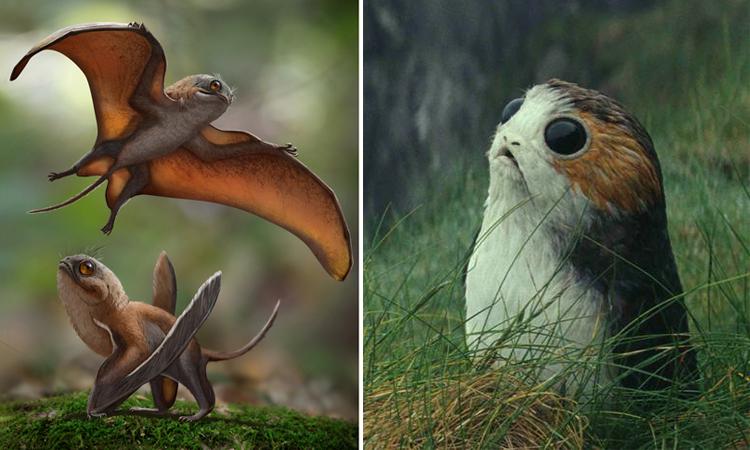 Mô phỏng loài Sinomacrops bondei (trái) so với chim Porgs trong phim Star Wars. Ảnh: Zhao Chuang.