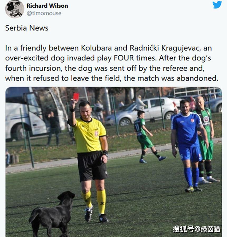 Chó bị thẻ đỏ vì liên tục chạy vào sân