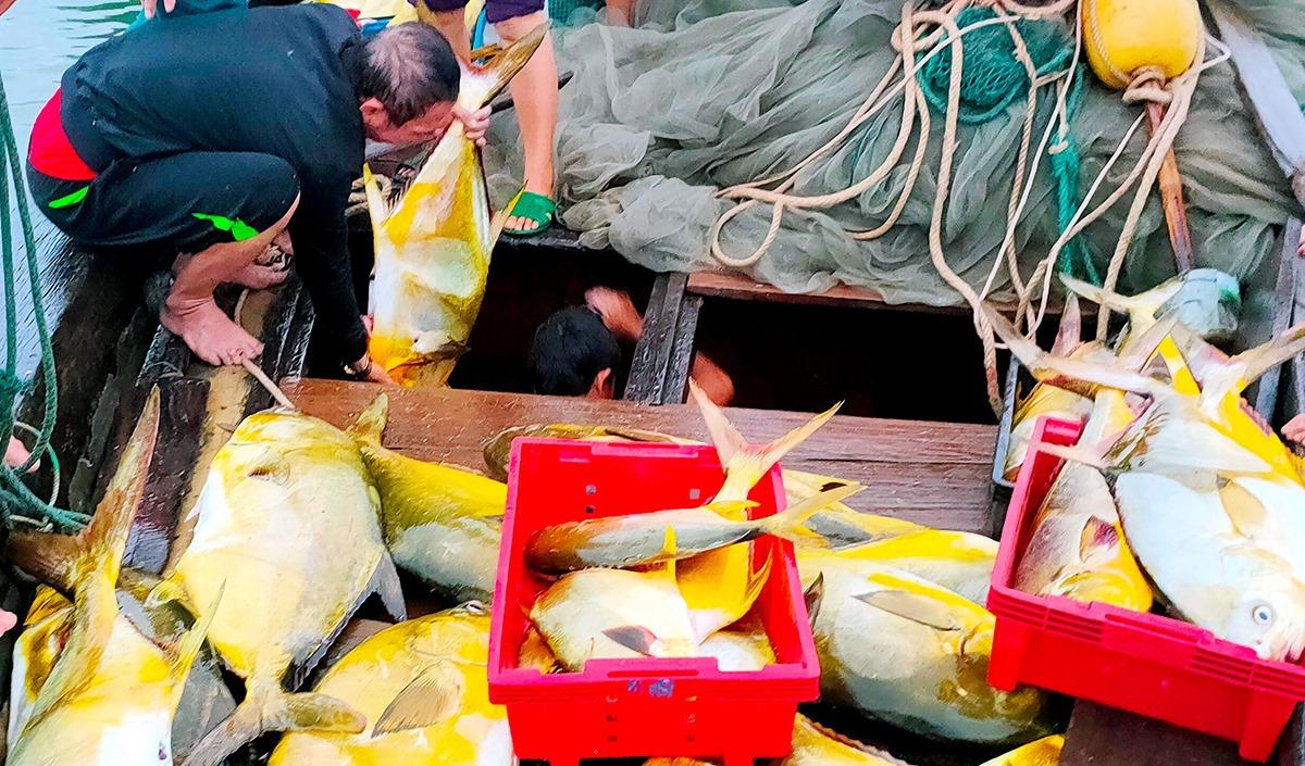 Ngư dân lấy cá từ khoang thuyền ra bỏ vào khay nhựa. Ảnh: Hương Thành