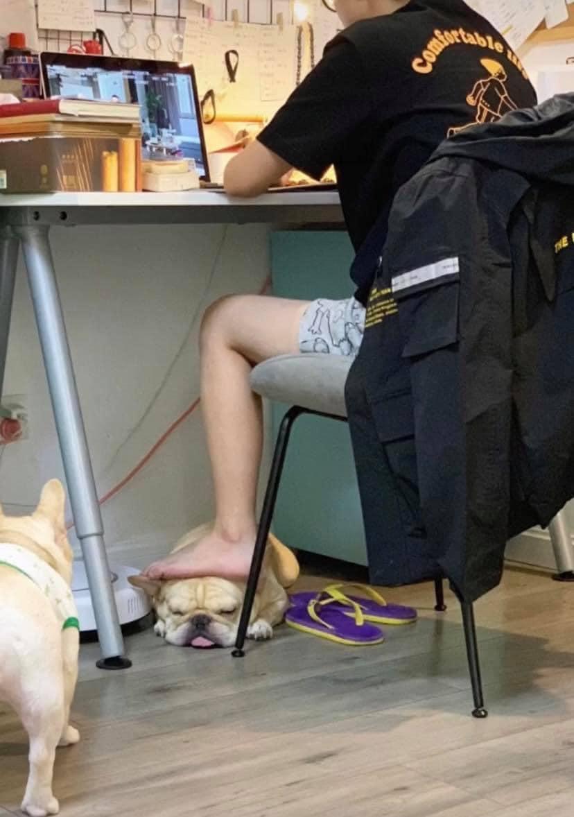 Chú chó bị gác chân lên lưng.