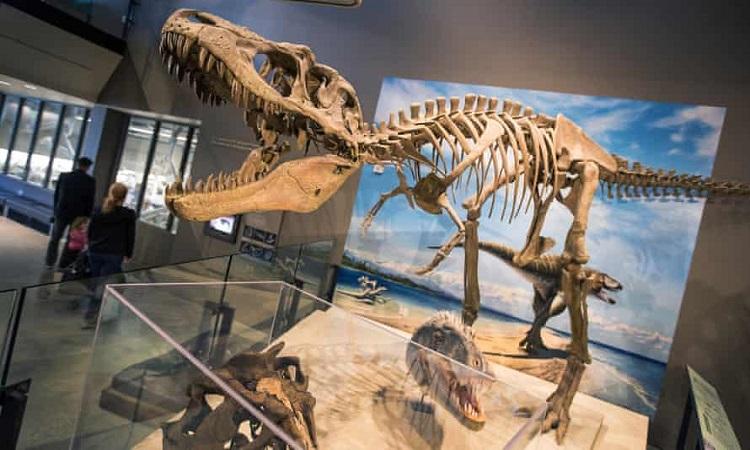 Một hóa thạch khủng long bạo chúa ở Đài tưởng niệm Grand Staircase-Escalante. Ảnh: Brian van der Brug/Los Angeles Times/Getty.
