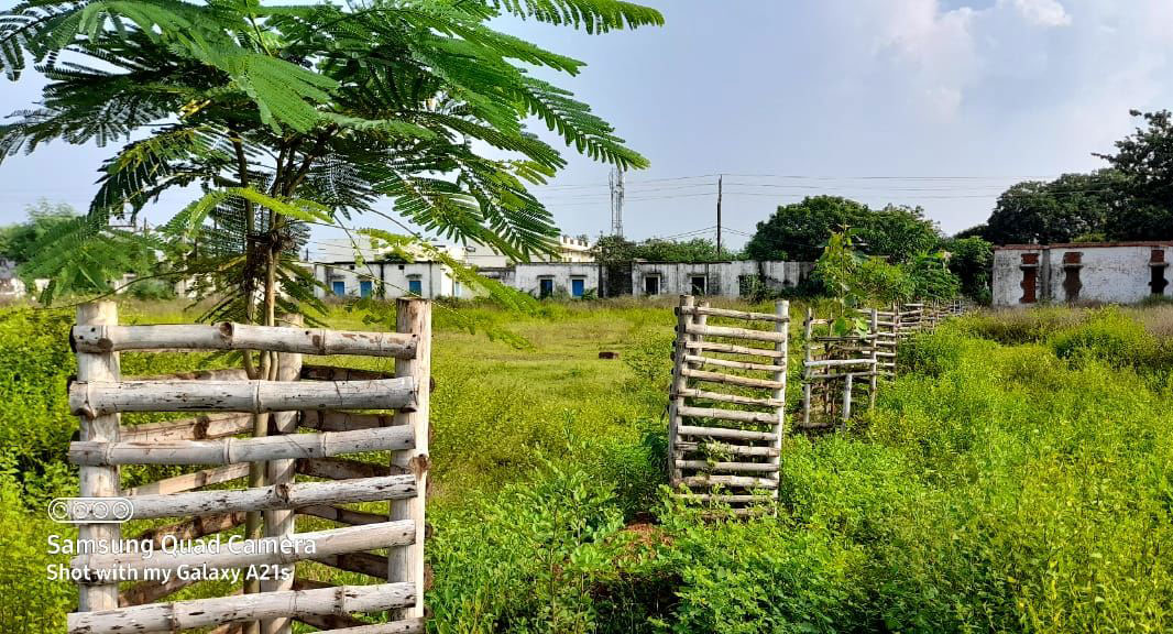 Khuôn viên trường được bao phủ bởi nhiều loại cây xanh. Ảnh: Alok Tripathi.