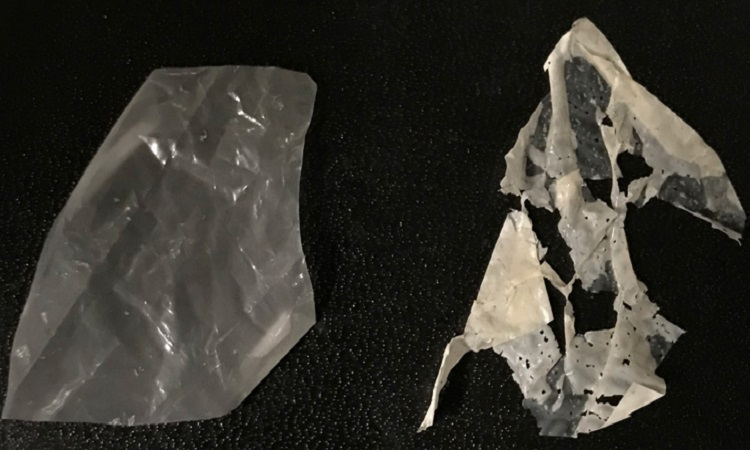 Nhựa đã biến đổi (trái) phân hủy sau 3 ngày (phải). Ảnh: Ting Xu.