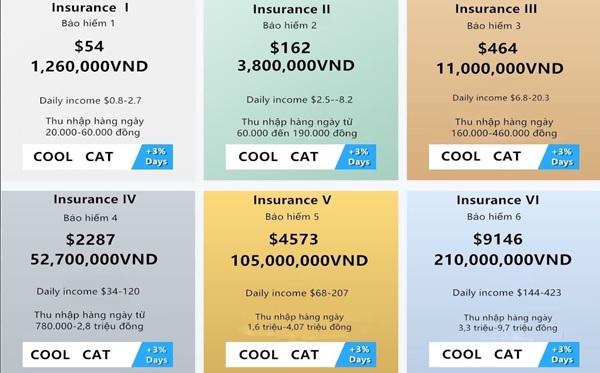 6 gói bảo hiểm Coolcat lôi kéo các nhà đầu tư. Ảnh: Nhân vật cung cấp.