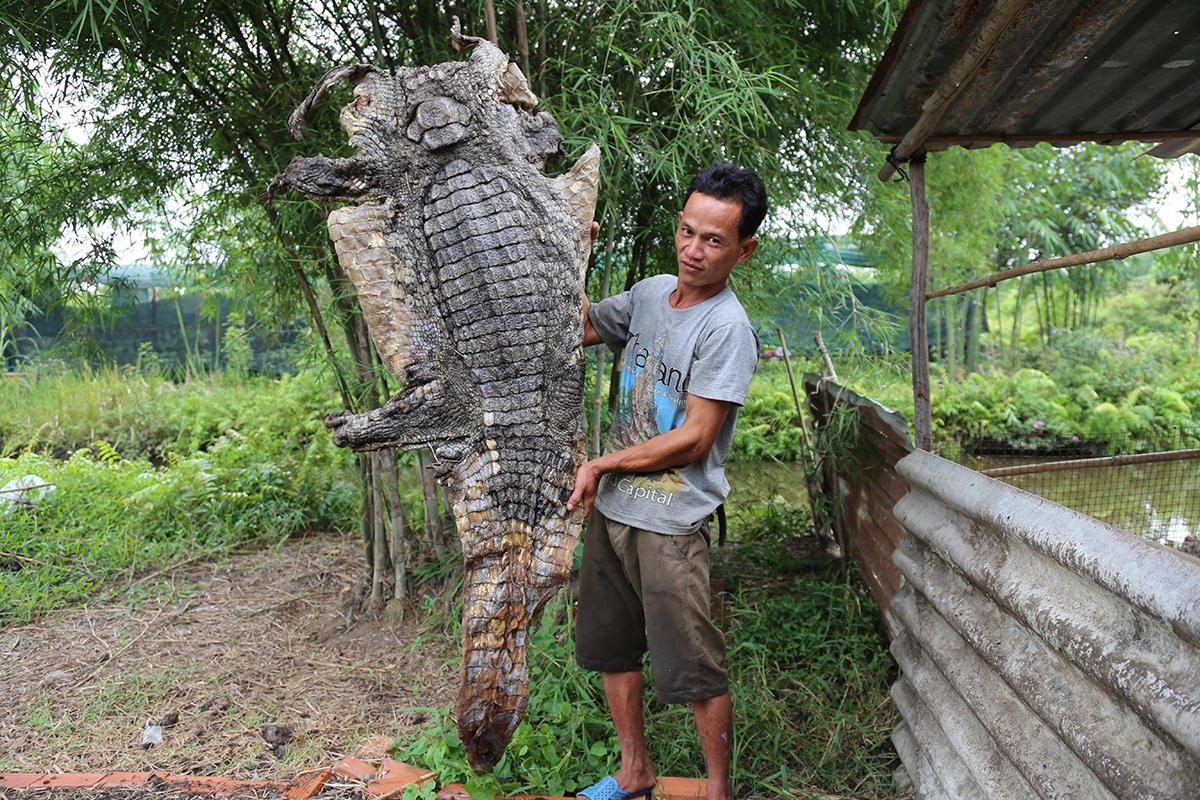 Bộ da con cá sấu được anh Thanh phơi khô. Ảnh: Đình Văn.