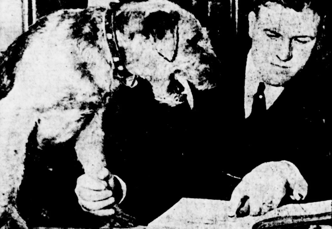 Dormie được lấy dấu bàn chân trước phiên tòa. Ảnh: Library of Congress.