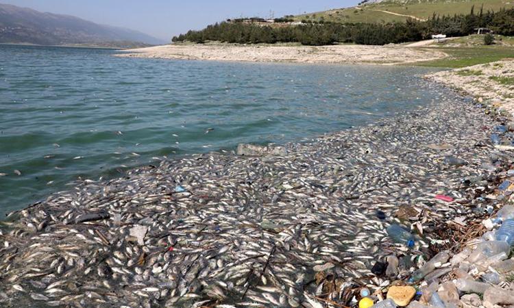 Cá chết hàng loạt trên hồ Qaraoun ở Lebanon. Ảnh: Reuters.