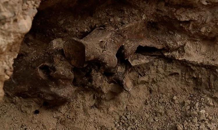 Một phần hóa thạch con ngựa nhô ra dưới hố đất. Ảnh: CNN.