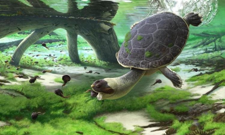 Phục dựng rùa mặt ếch hút con mồi dưới nước. Ảnh: Andrey Atuchin.
