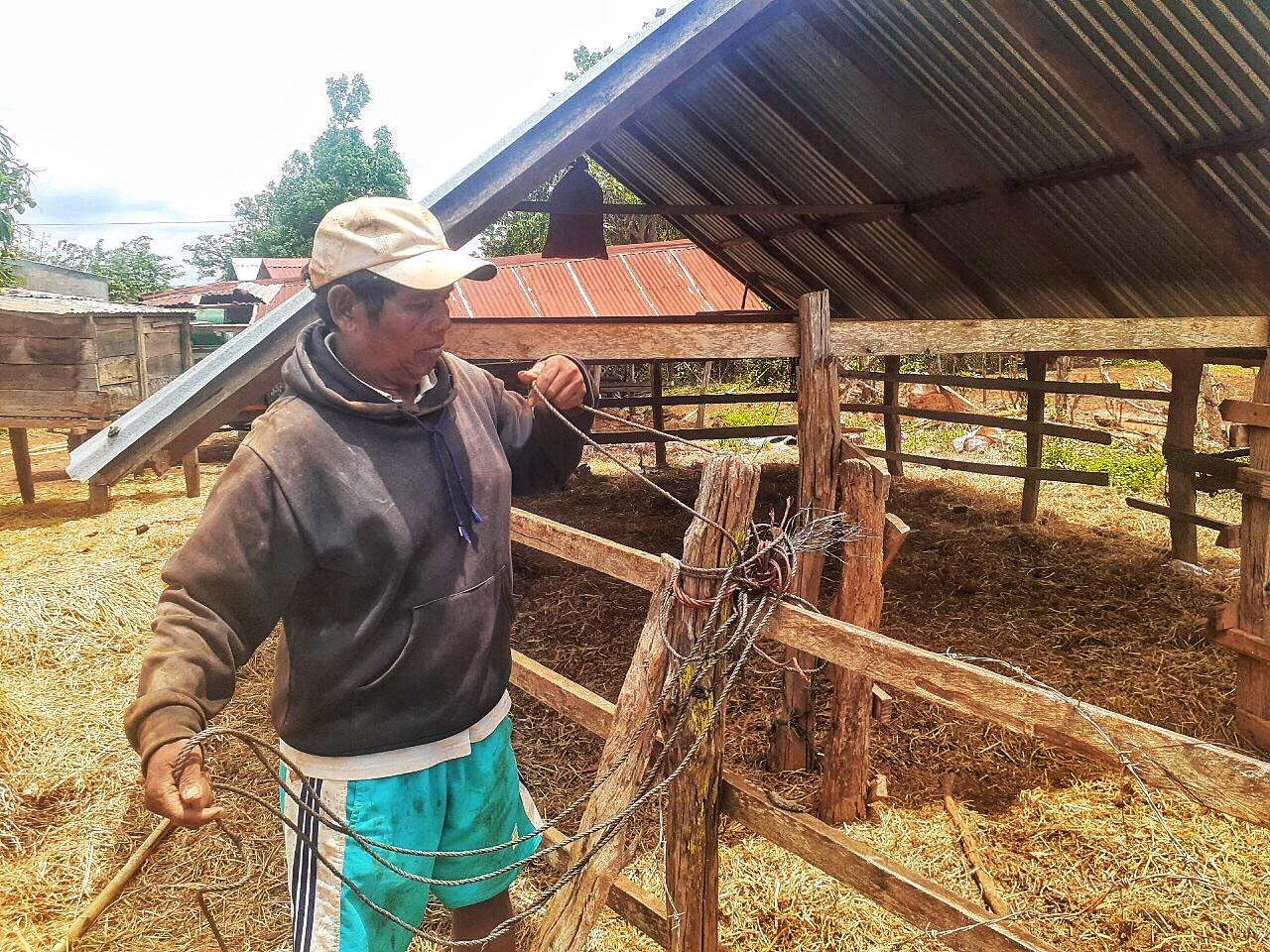 Đàn bò 14 con của gia đình ông Ngap bây giờ chỉ còn 4 con. Ảnh: Trần Hóa.