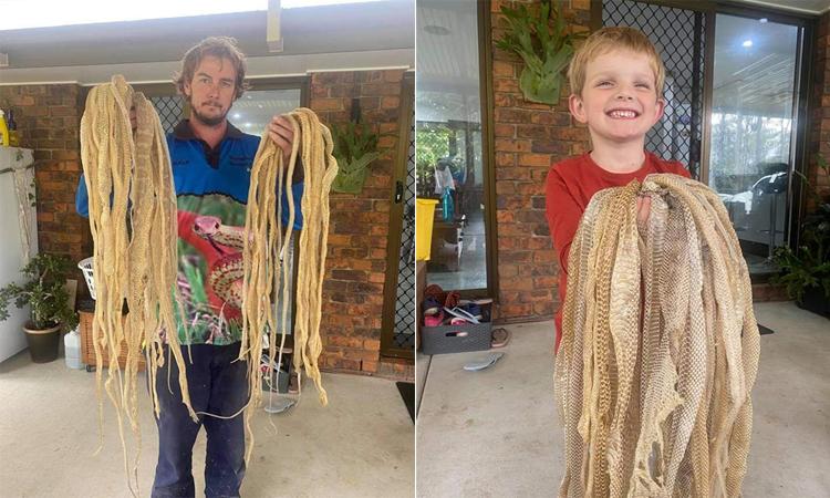 Dave cầm khoảng 30 bộ da rắn (trái) và một em nhỏ trong gia đình ở bang Queensland (phải). Ảnh: Sunshine Coast Snake Catchers.