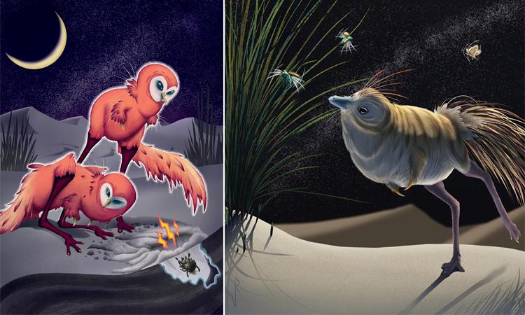 Các mô phỏng về loài khủng long giống chim Shuvuuia Desti. Ảnh: Viktor Radermaker.