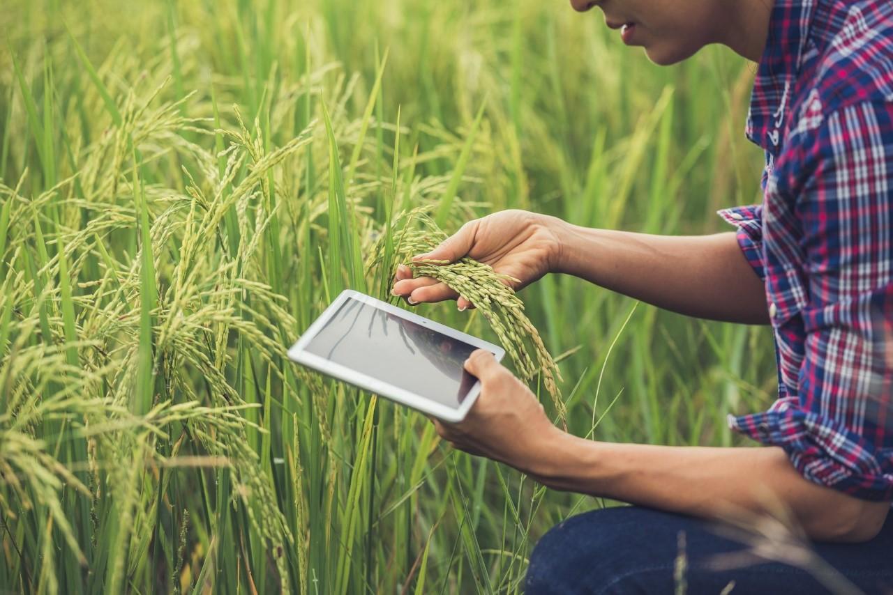 Sinh viên Đại học Kinh tế TP HCM học ngành kinh doanh nông nghiệp sẽ thu thập, tìm kiến  thức tại các nông trại trong nước.