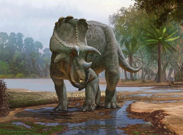 Mô phỏng loài khủng long ba sừng Menefeeceratops sealeyi. Ảnh: Sergey Krasovskiy.
