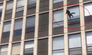 Mèo đáp đất an toàn sau cú nhảy từ tòa nhà bốc cháy