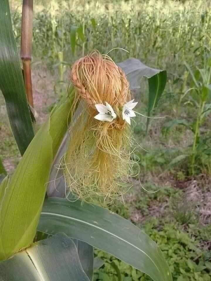 Trổ tài làm tóc siêu đẹp từ râu ngô - 5