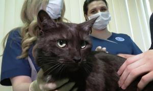 Nga tiêm vaccine Covid-19 cho mèo