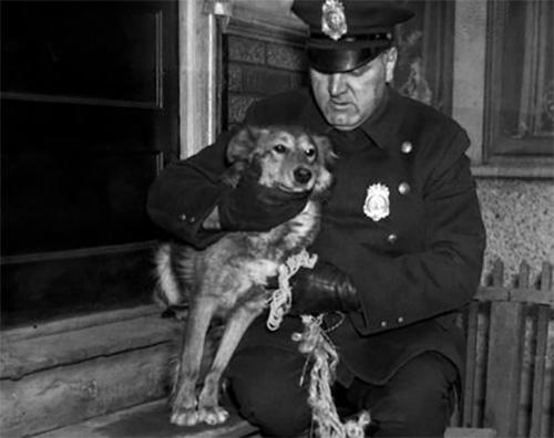 Chú chó Brownie trung thành với bà chủ. Ảnh: NY Daily News