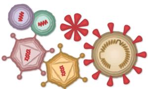 Vaccine Covid-19 hoạt động như thế nào?