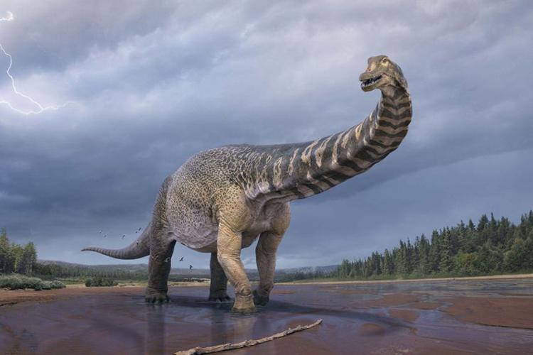 Mô phỏng loài khủng long lớn nhất Australia Australotitan cooperensis. Ảnh: Bảo tàng Queensland.