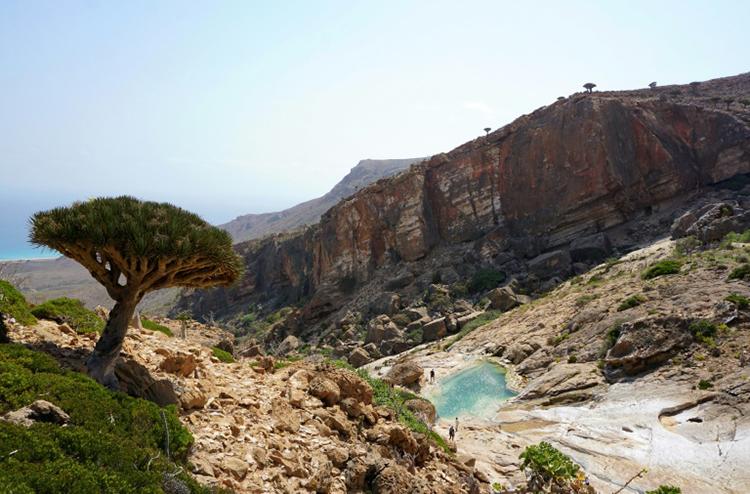Một cây long huyết mọc đơn độc trên sườn đồi Homhil ở phía đông bắc đảo Socotra. Ảnh: AFP.